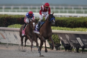 Horse Racing Picks Gulfstream Park