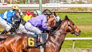 Monmouth Picks, Saratoga and Woodbine Best Bets